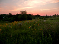 Restored Prairie at Sunset